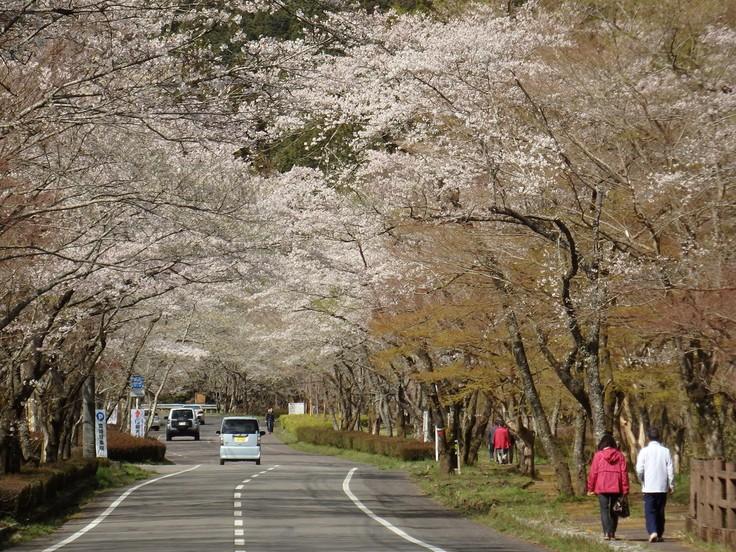 『寺尾ヶ原千本桜公園を歩いて』_d0054276_2059429.jpg