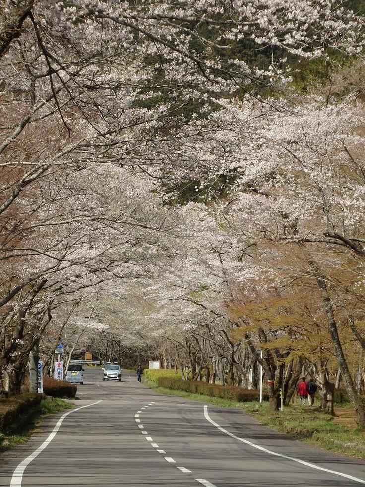 『寺尾ヶ原千本桜公園を歩いて』_d0054276_2059521.jpg