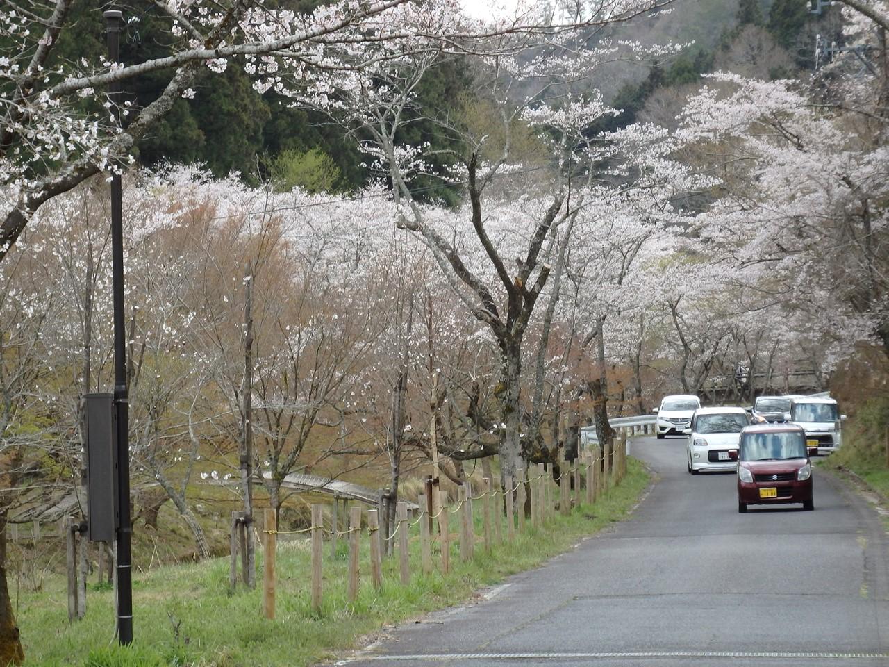 『寺尾ヶ原千本桜公園を歩いて』_d0054276_210121.jpg
