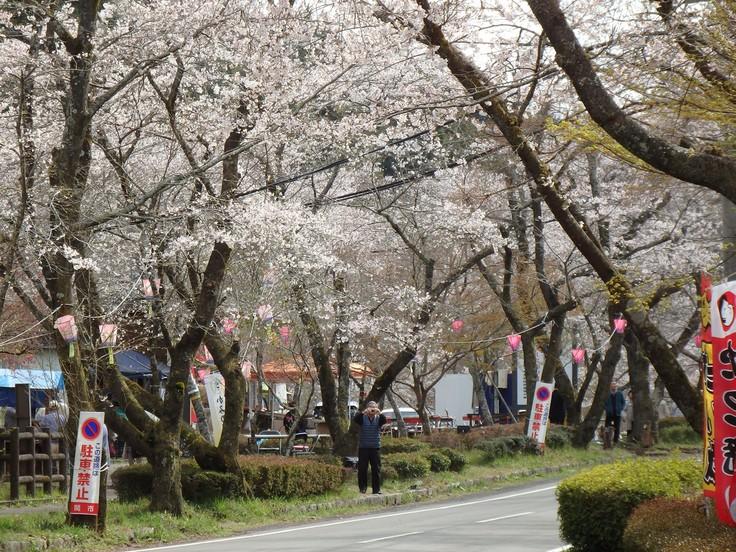 『寺尾ヶ原千本桜公園を歩いて』_d0054276_210204.jpg