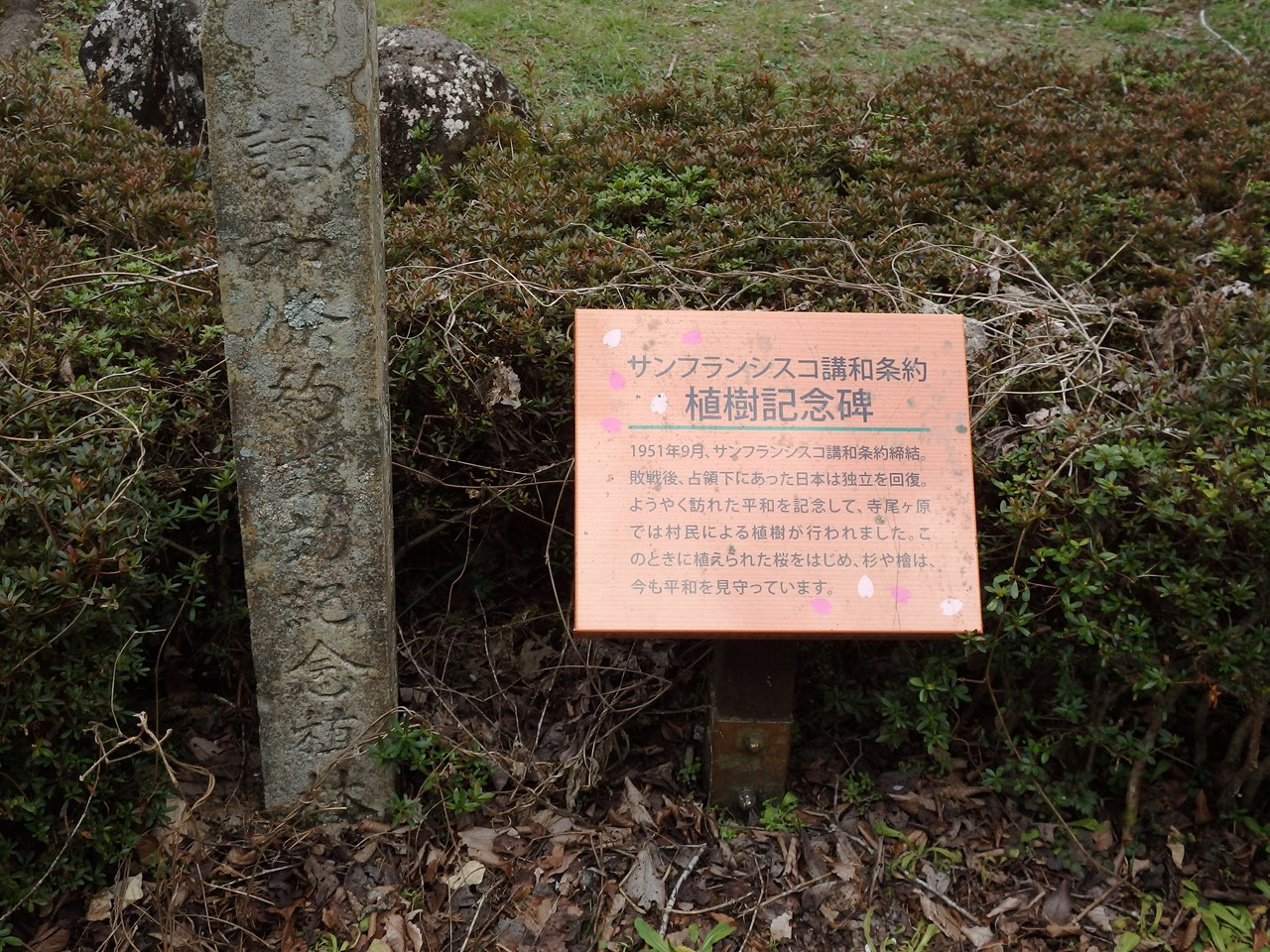 『寺尾ヶ原千本桜公園を歩いて』_d0054276_2104217.jpg
