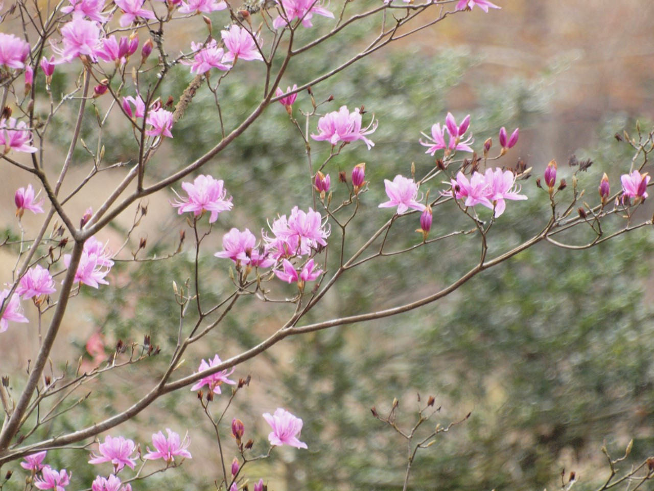 『寺尾ヶ原千本桜公園を歩いて』_d0054276_2112351.jpg