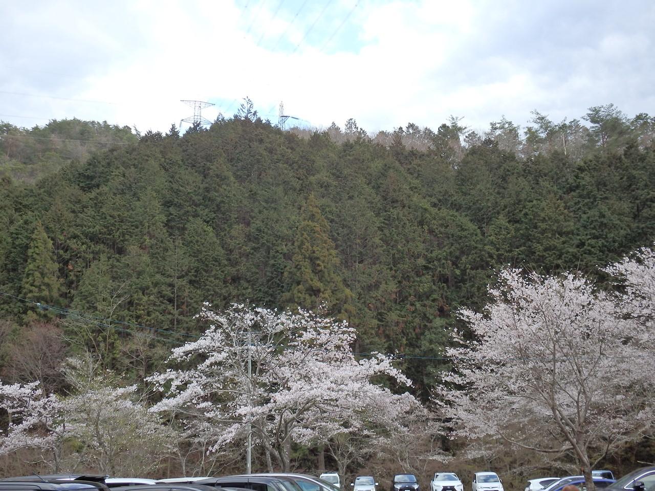 『寺尾ヶ原千本桜公園を歩いて』_d0054276_211598.jpg