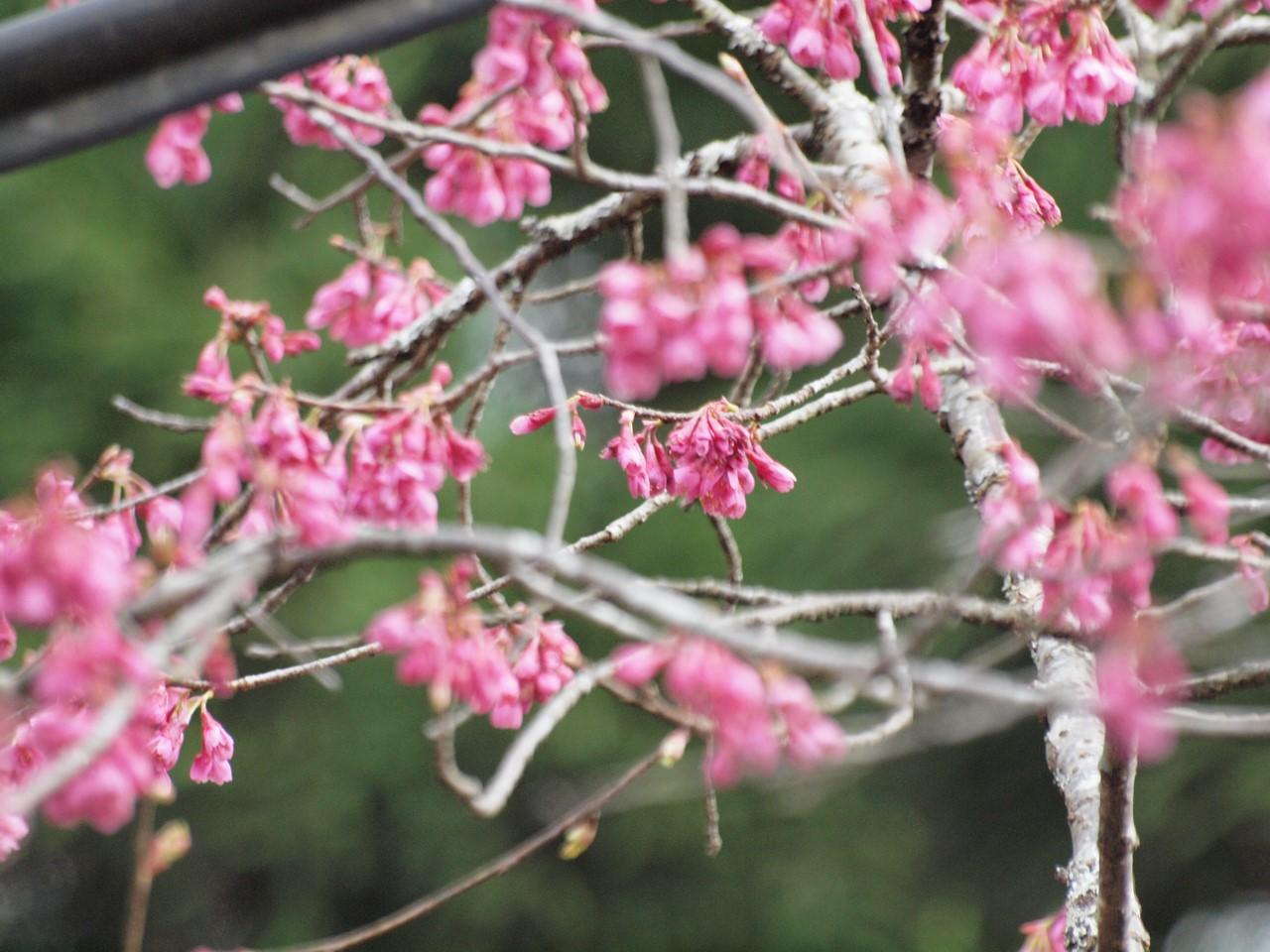『寺尾ヶ原千本桜公園を歩いて』_d0054276_2122592.jpg