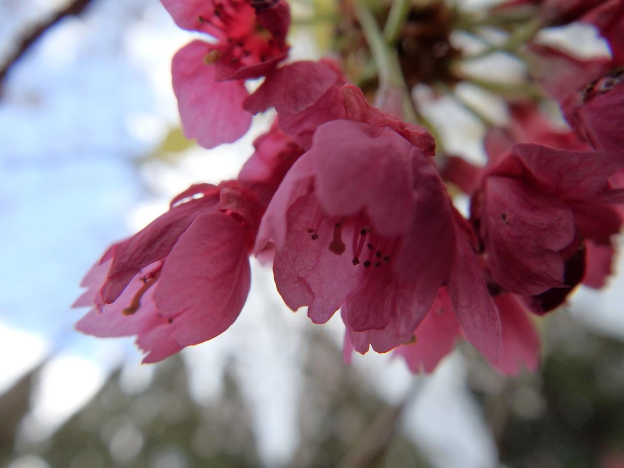 『寺尾ヶ原千本桜公園を歩いて』_d0054276_2123620.jpg