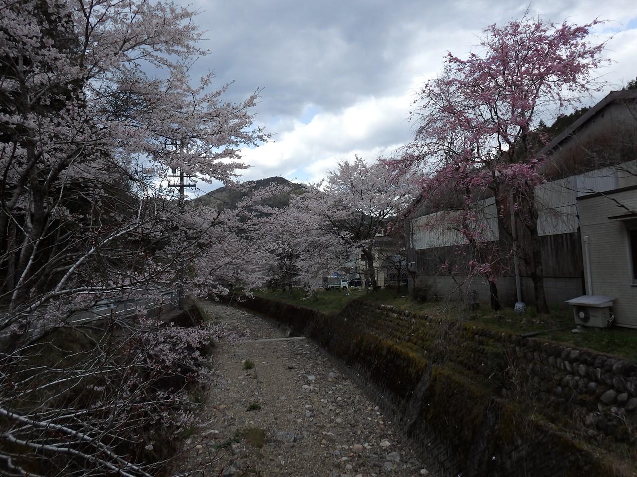 『寺尾ヶ原千本桜公園を歩いて』_d0054276_2133035.jpg