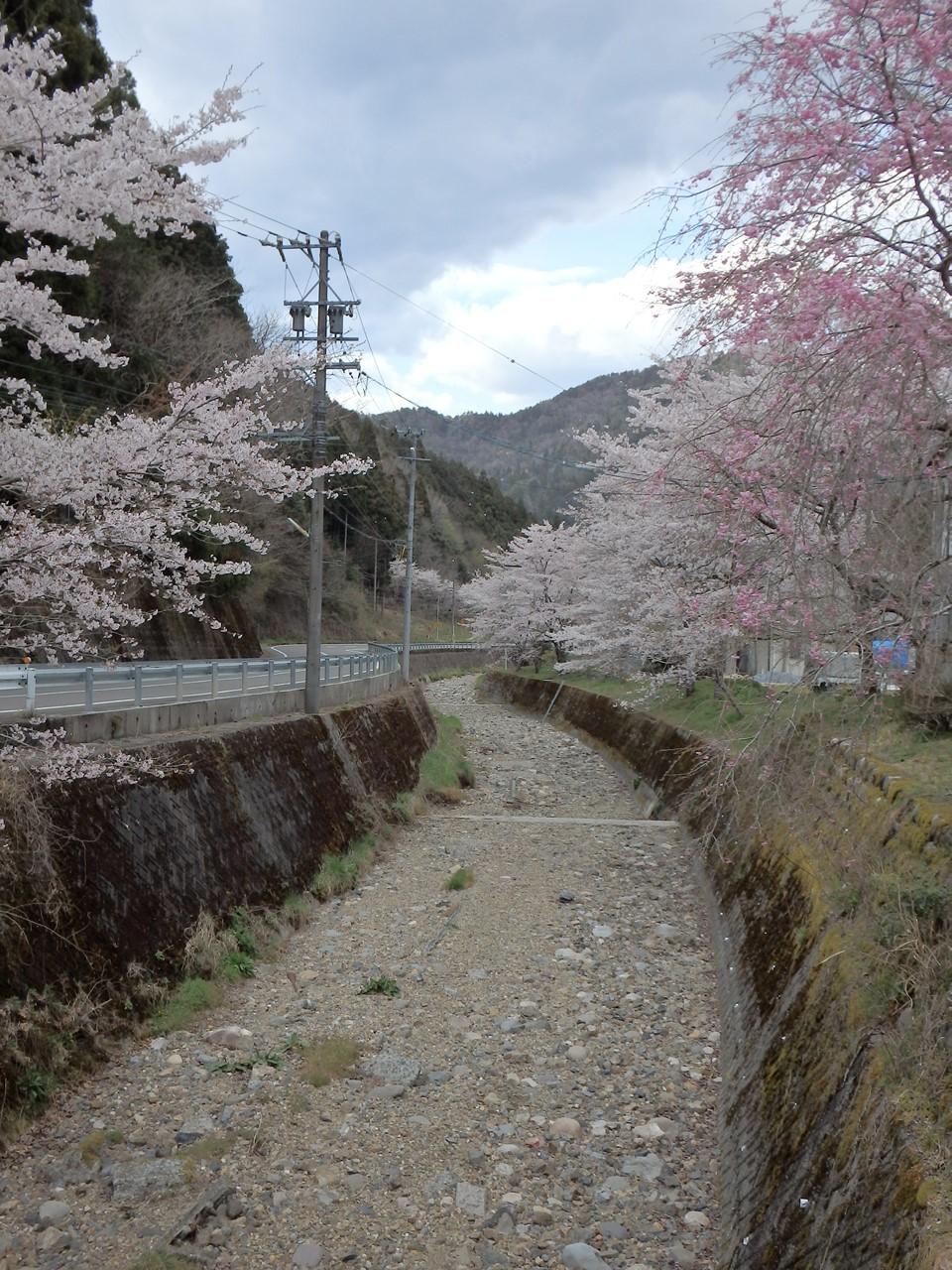 『寺尾ヶ原千本桜公園を歩いて』_d0054276_2134041.jpg