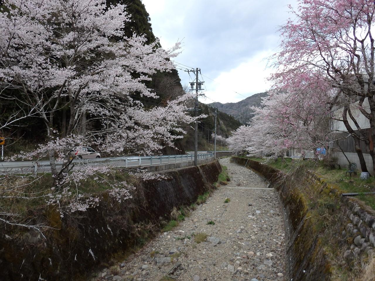 『寺尾ヶ原千本桜公園を歩いて』_d0054276_21371.jpg