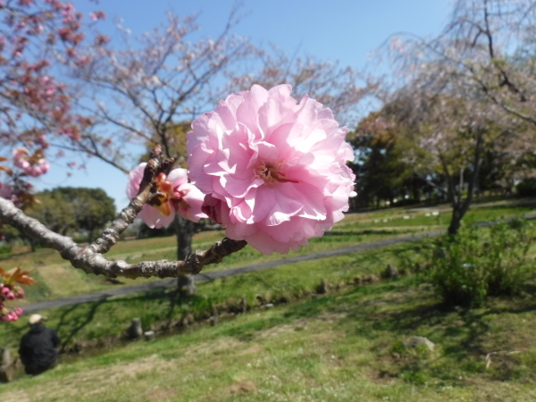 春の移り変わり_d0121678_18180807.jpg