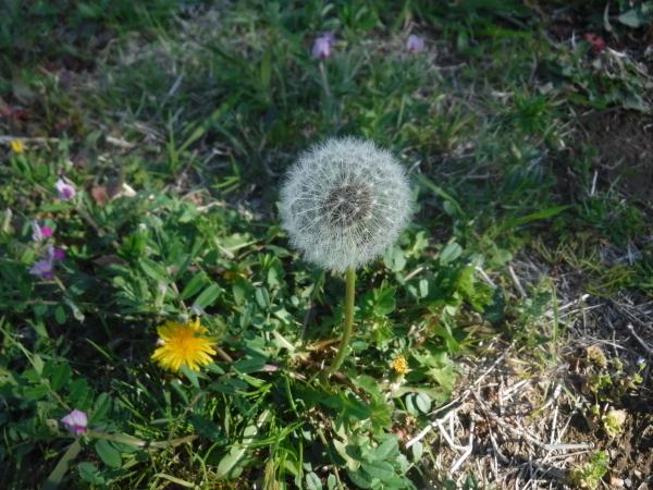 春の移り変わり_d0121678_18182930.jpg