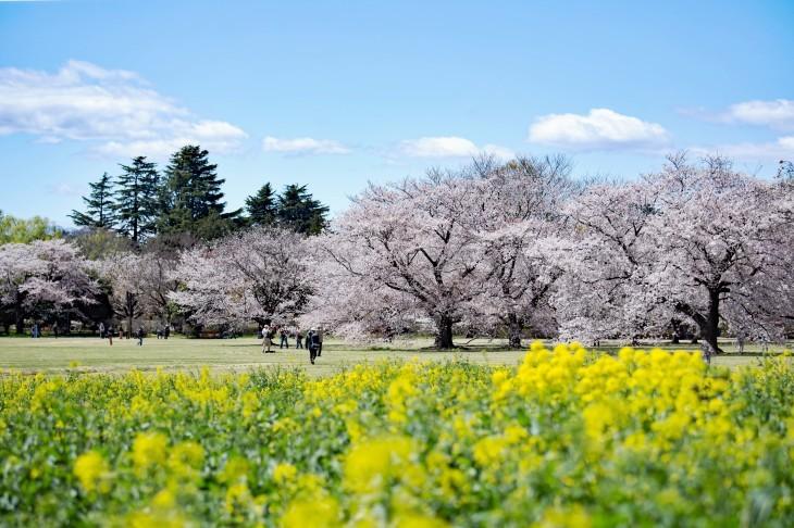 平成の桜集_e0305388_10340719.jpg