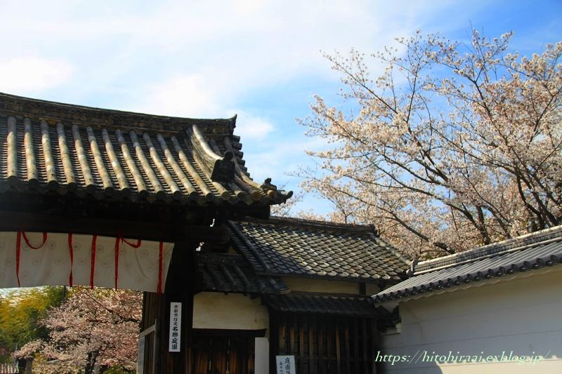 京都の桜 勧修寺_f0374092_16203105.jpg
