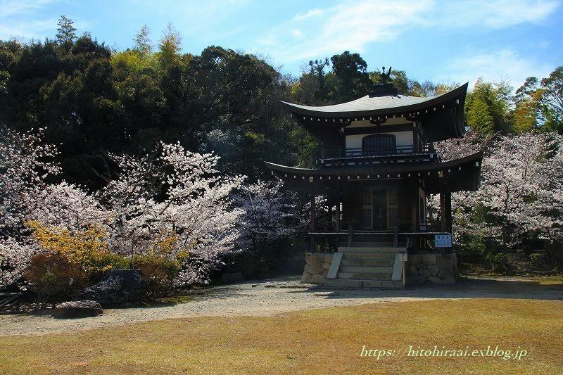 京都の桜 勧修寺_f0374092_16211853.jpg
