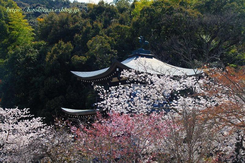 京都の桜 勧修寺_f0374092_16264495.jpg