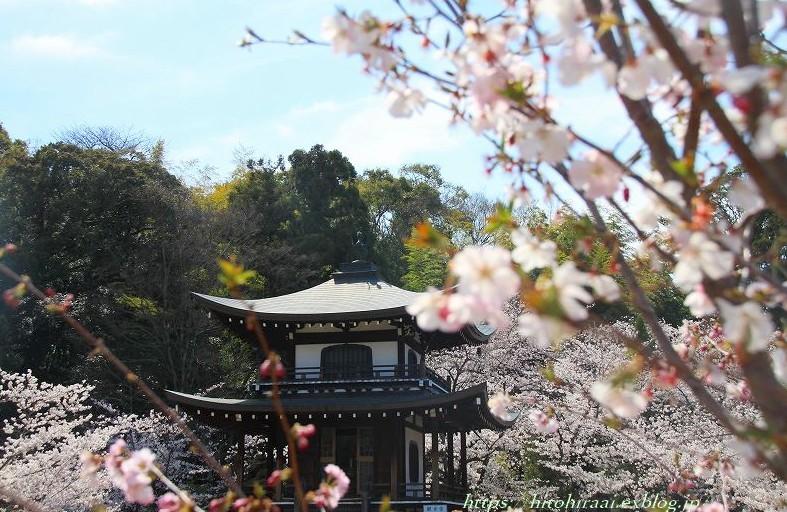 京都の桜 勧修寺_f0374092_16272267.jpg