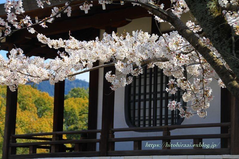 京都の桜 勧修寺_f0374092_16280076.jpg