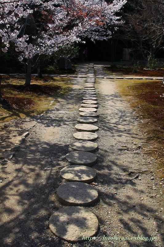 京都の桜 勧修寺_f0374092_16290424.jpg