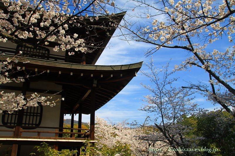 京都の桜 勧修寺_f0374092_16300683.jpg