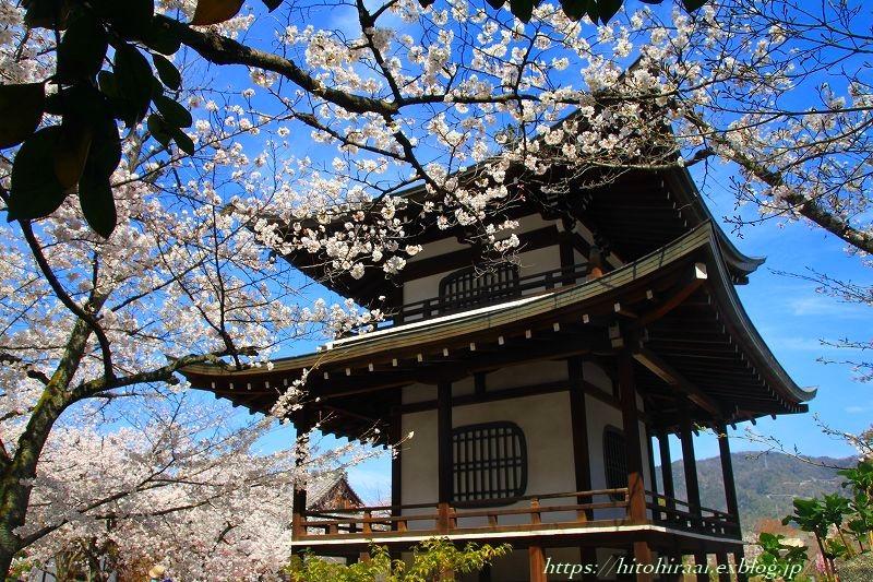 京都の桜 勧修寺_f0374092_16302635.jpg