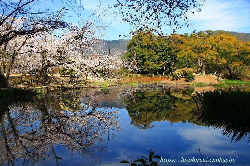 京都の桜 勧修寺_f0374092_16321813.jpg