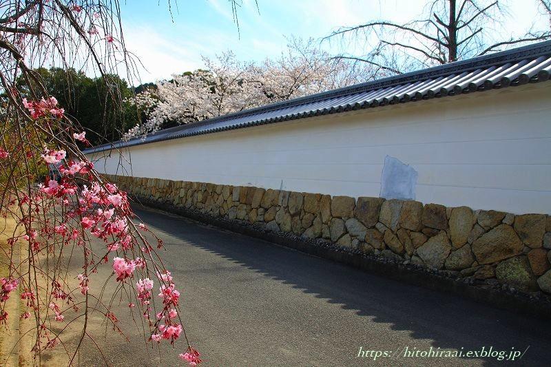 京都の桜 勧修寺_f0374092_16324914.jpg