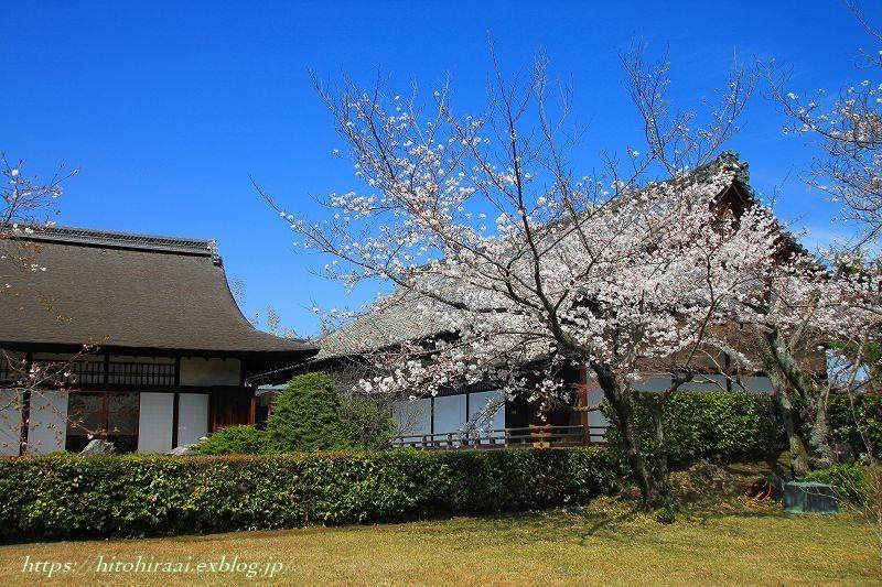 京都の桜 勧修寺_f0374092_16402365.jpg