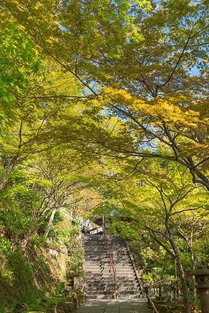 鎌倉・長谷寺の桜2019_b0145398_23250363.jpg