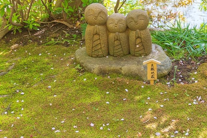 鎌倉・長谷寺の桜2019_b0145398_23282021.jpg