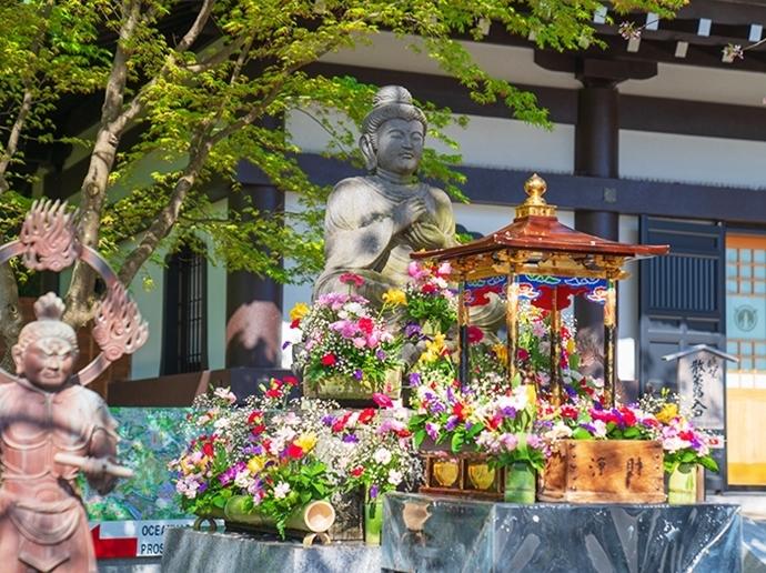 鎌倉・長谷寺の桜2019_b0145398_23285976.jpg