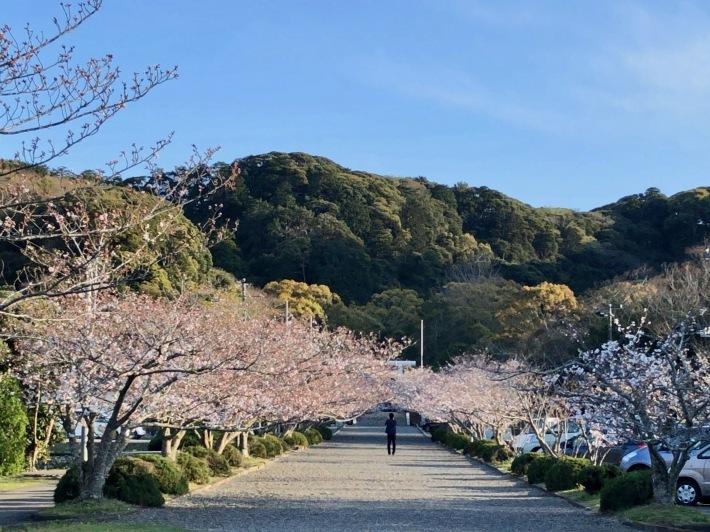 桜ウィーク_b0147922_17004512.jpg