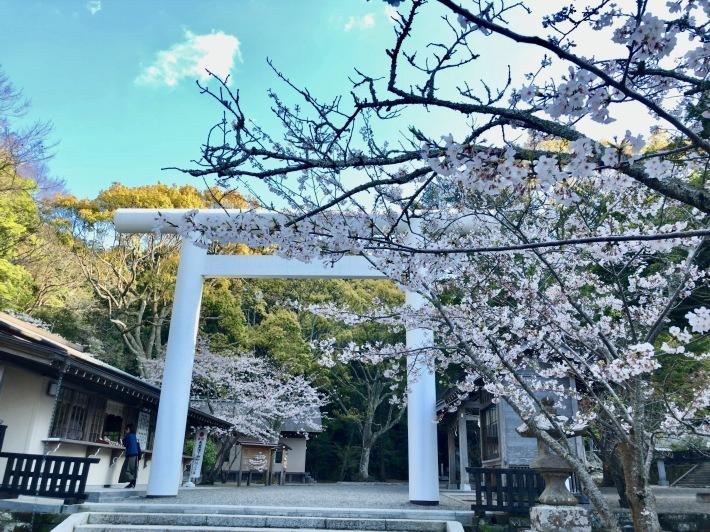 桜ウィーク_b0147922_17010432.jpg