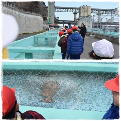 鮭稚魚放流会とシイタケ植菌体験なのだ!_c0259934_09465660.jpg