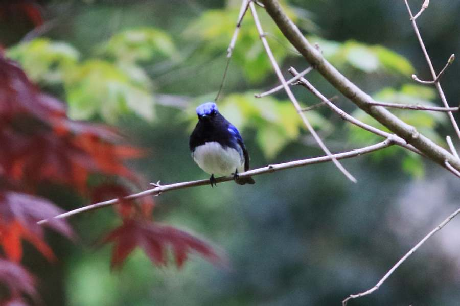 春の渡りの野鳥たち_e0077041_21391571.jpg