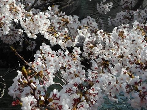 2019年の「花見」(2)_f0197754_19222652.jpg