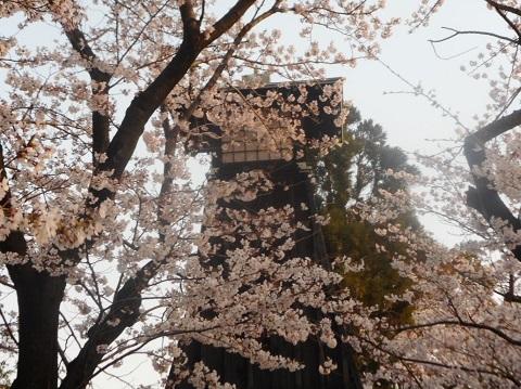 2019年の「花見」(2)_f0197754_19294779.jpg
