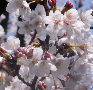 2019年の「花見」(2)_f0197754_19301154.jpg