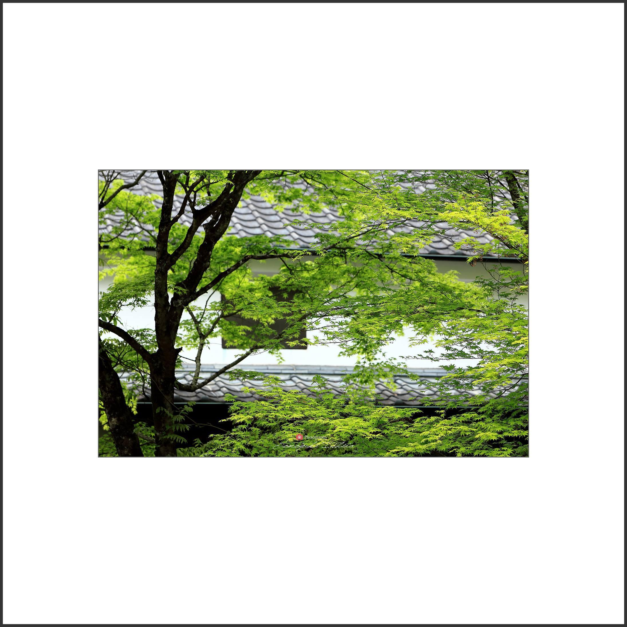 新緑_c0253556_05125547.jpg