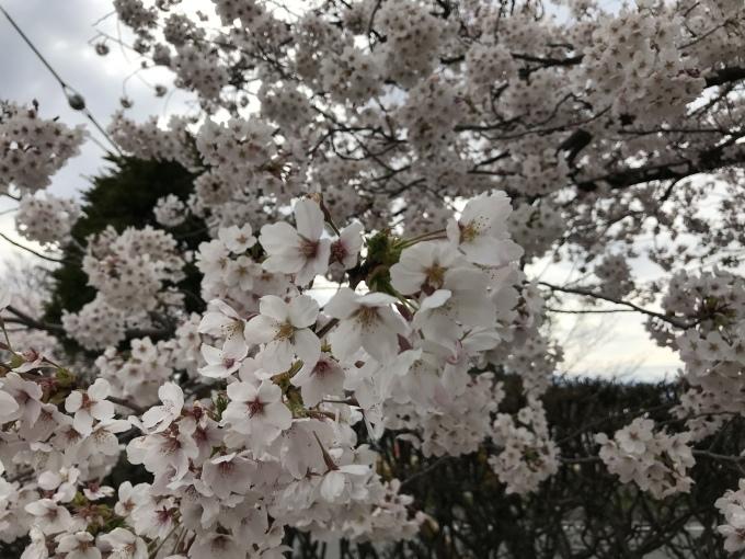 松本城_f0303858_16402258.jpeg