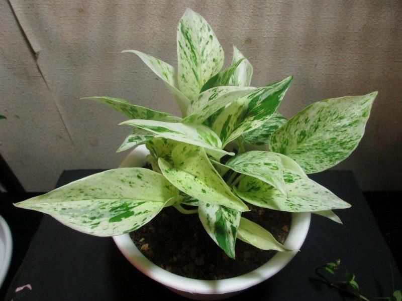 植物「出来る事から始めてみる」_b0362459_17295682.jpg