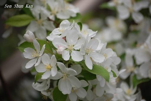 真っ白な花_a0164068_19563541.jpg