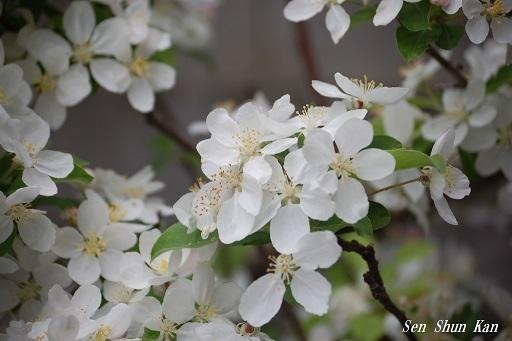 真っ白な花_a0164068_19563551.jpg