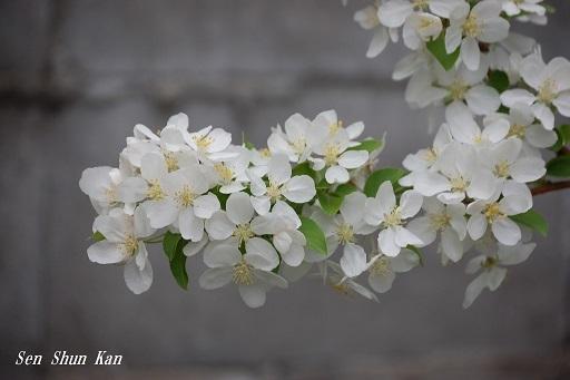 真っ白な花_a0164068_19563566.jpg