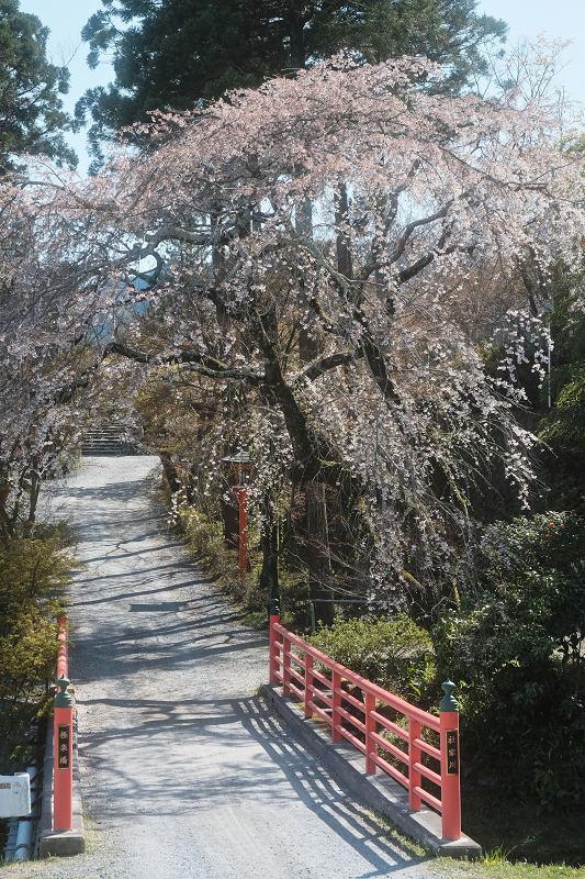 桜 2019_f0021869_00115132.jpg