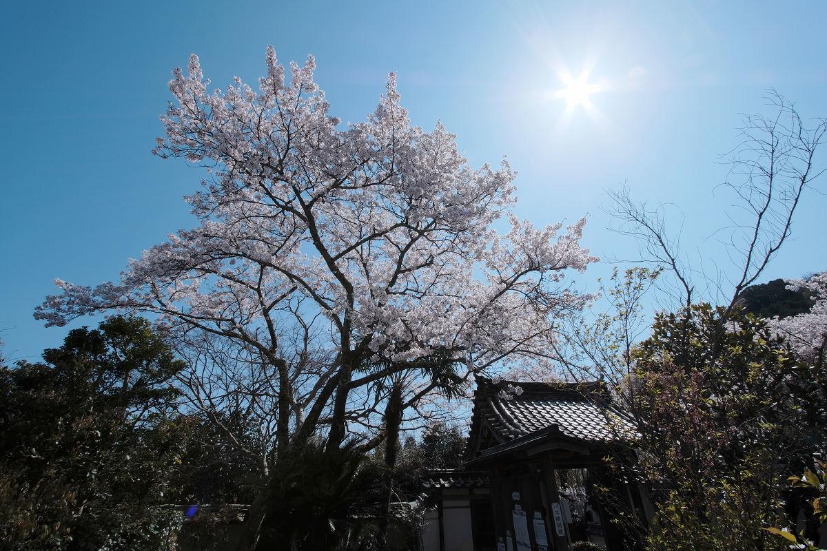 桜 2019_f0021869_00115212.jpg
