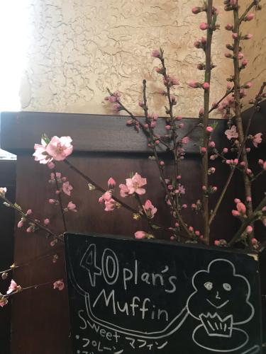 桃の花_d0144871_07583712.jpg