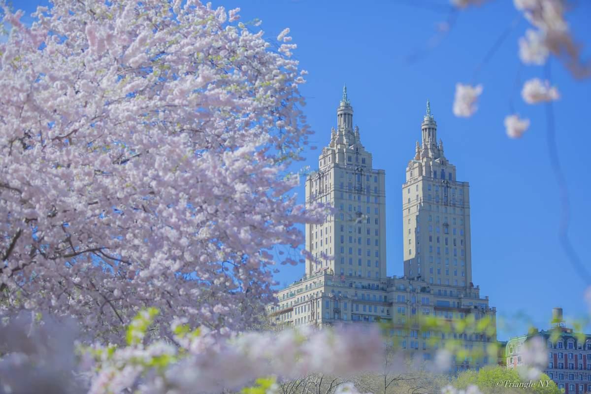 Spring New York 2019 ー900作品達成記念②ー_a0274805_23463830.jpg