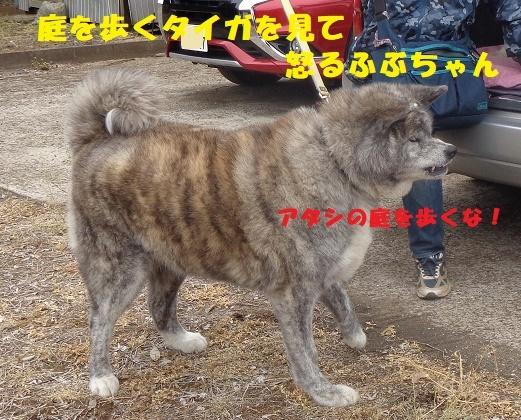 f0121712_23012850.jpg