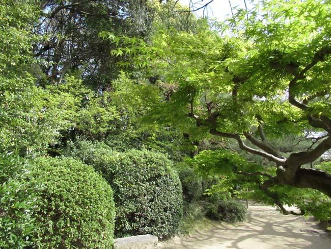 平安神宮 神苑散策_e0048413_18583040.jpg