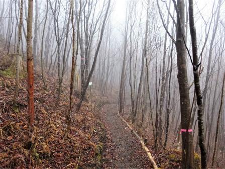 みんなの森活動日記_d0105723_09461374.jpg