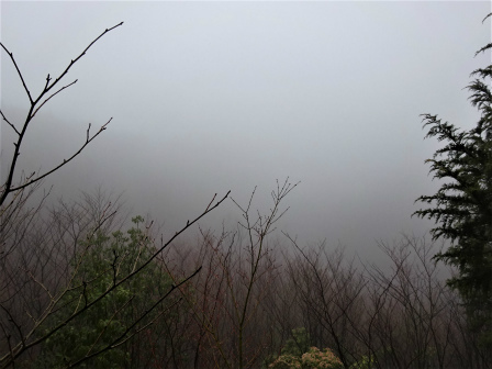 みんなの森活動日記_d0105723_09472536.jpg
